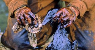 Film: Listening to the Sound - The Work of the Exxon Valdez Oil Spill Trustee Council