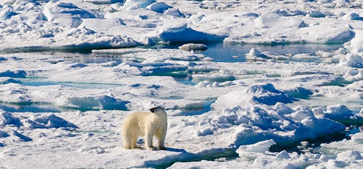 2015_stock_seaice_5.jpg (1)