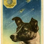 73_Space Dog postcard.jpg